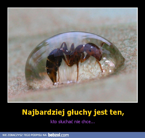 http://images01.bebzol.com/data/201206/77359-08bec6523ab2e434e96f7809caf2e135.jpg