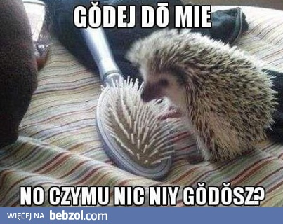Godej do mie